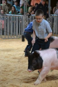 Cover photo for 2020 Albemarle County 4-H Livestock Show and Sale Registration