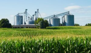 Cover photo for Grain Marketing Webinar Resources