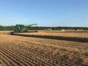 Perquimans County Wheat Yield Contest Plot